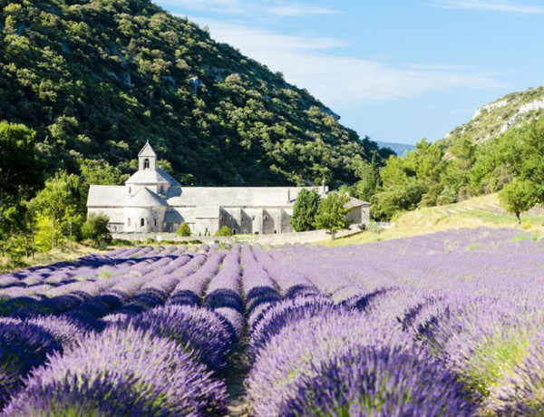 Senanque Abbey with lavender field in Provence, France