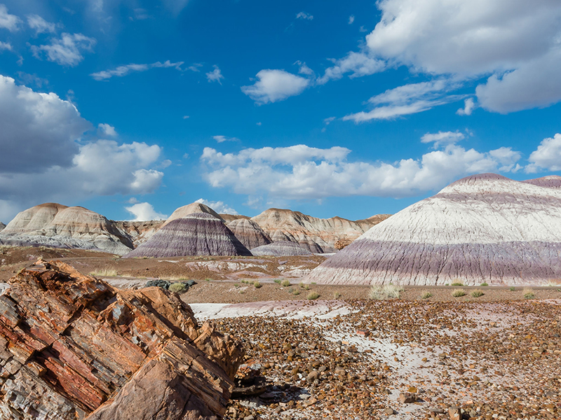 Petrified Forest National Park on Route 66 in Arizona. Photo: Steve Lagreca