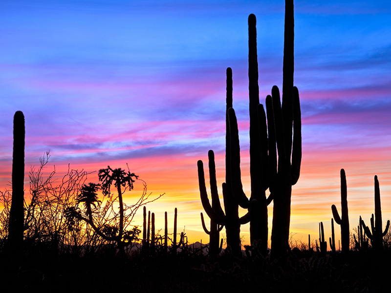 The sun sets over Saguaro National Park in Arizona. Photo: Anton Folin