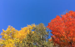 muskoka fall colors